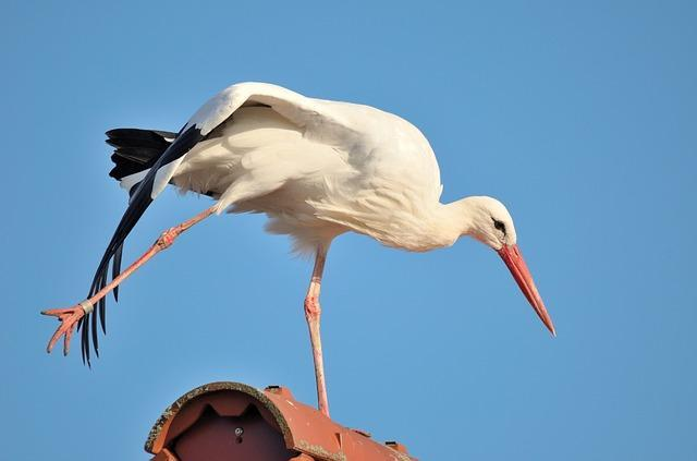 Stretch like this stork